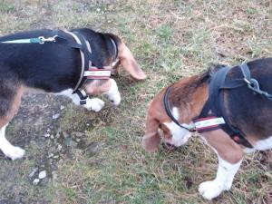 Kunsten at gå tur med flere hunde