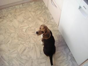 Hunde 010