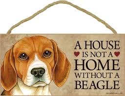 ahousewithoutabeagle