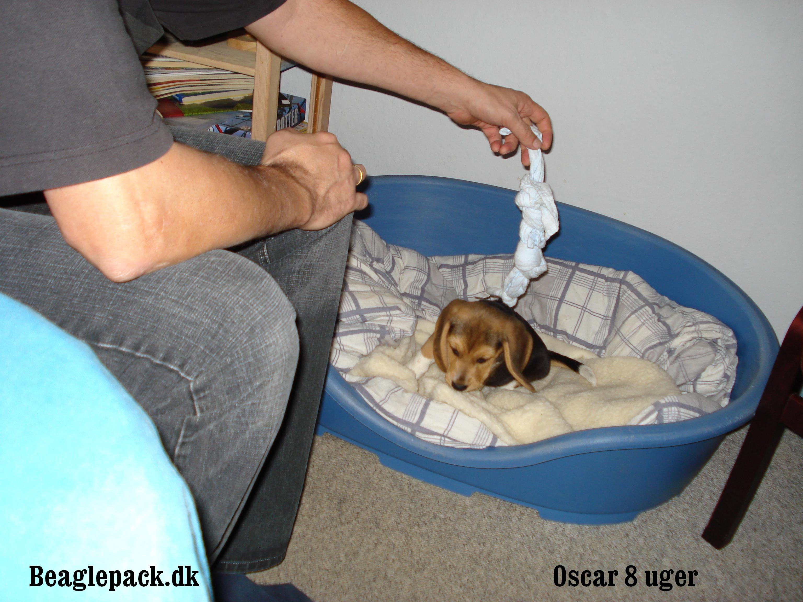 Oscar er lige flyttet ind - 8 uger