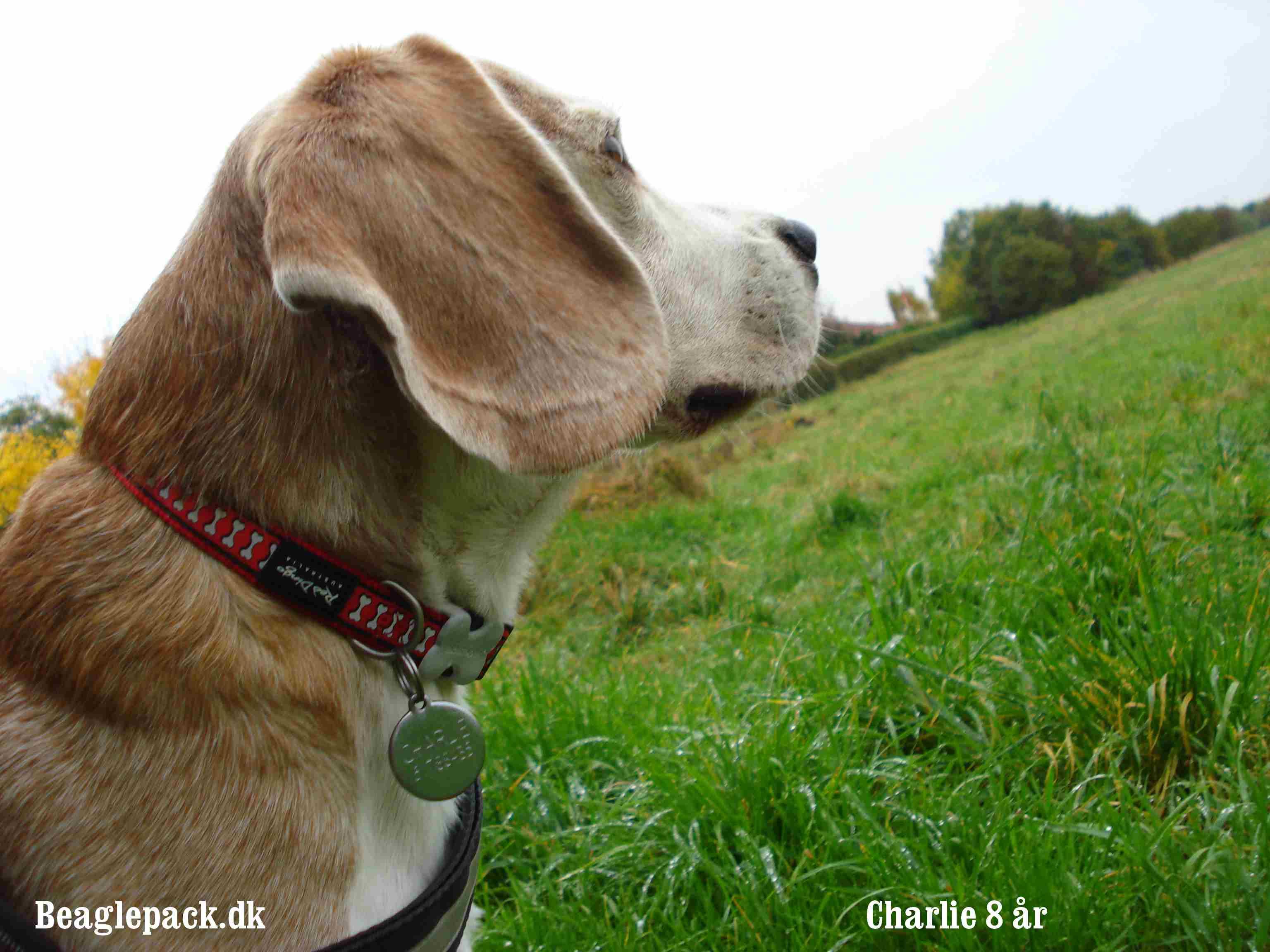 Charlies 8 års fødselsdag 2012
