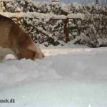 Vinterbilleder (jan 2013)