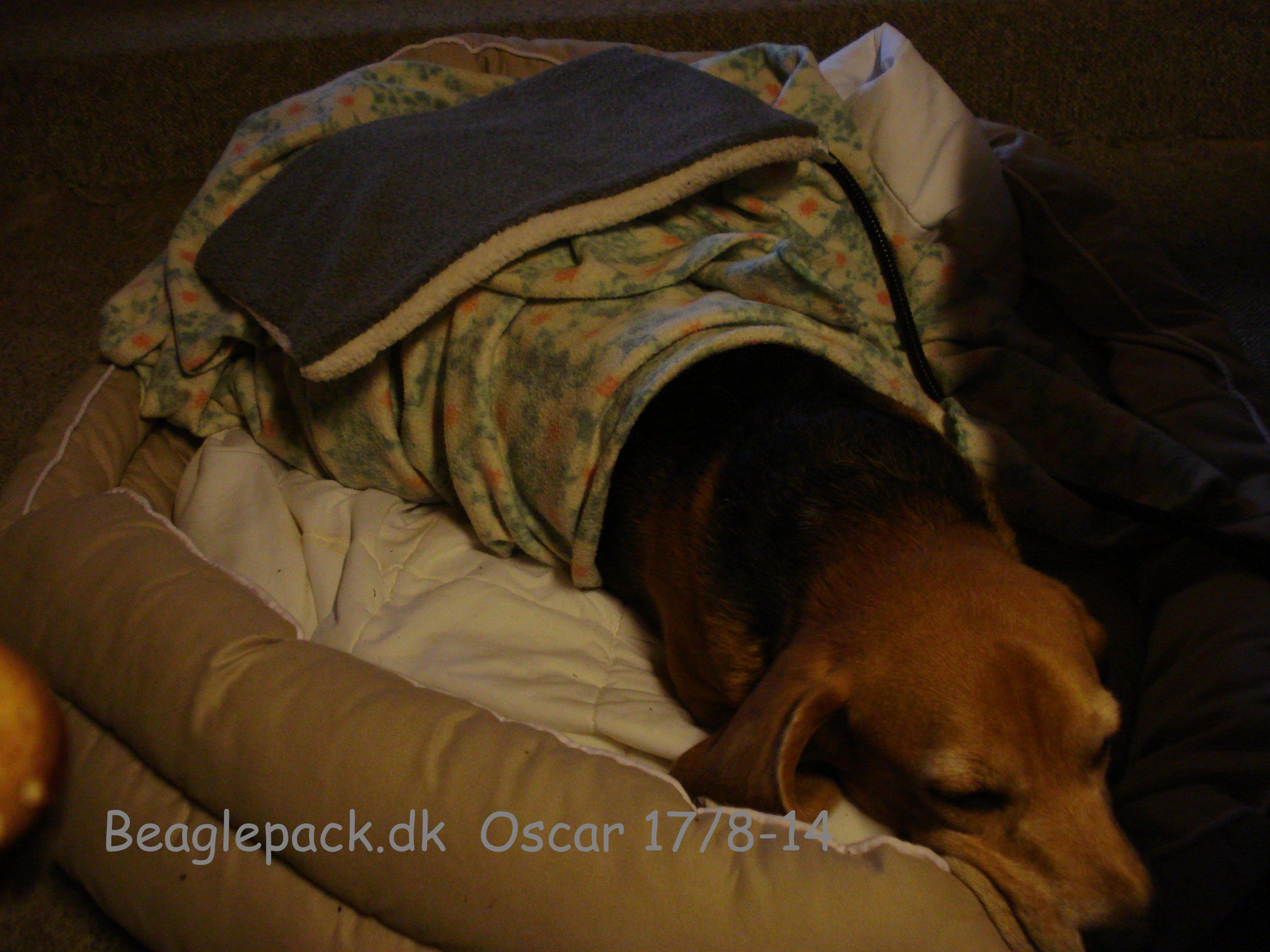 Oscar i hvile og med varmepuden på ryggen