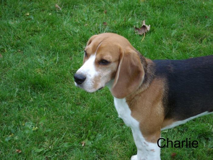 Charlie sommer 2008
