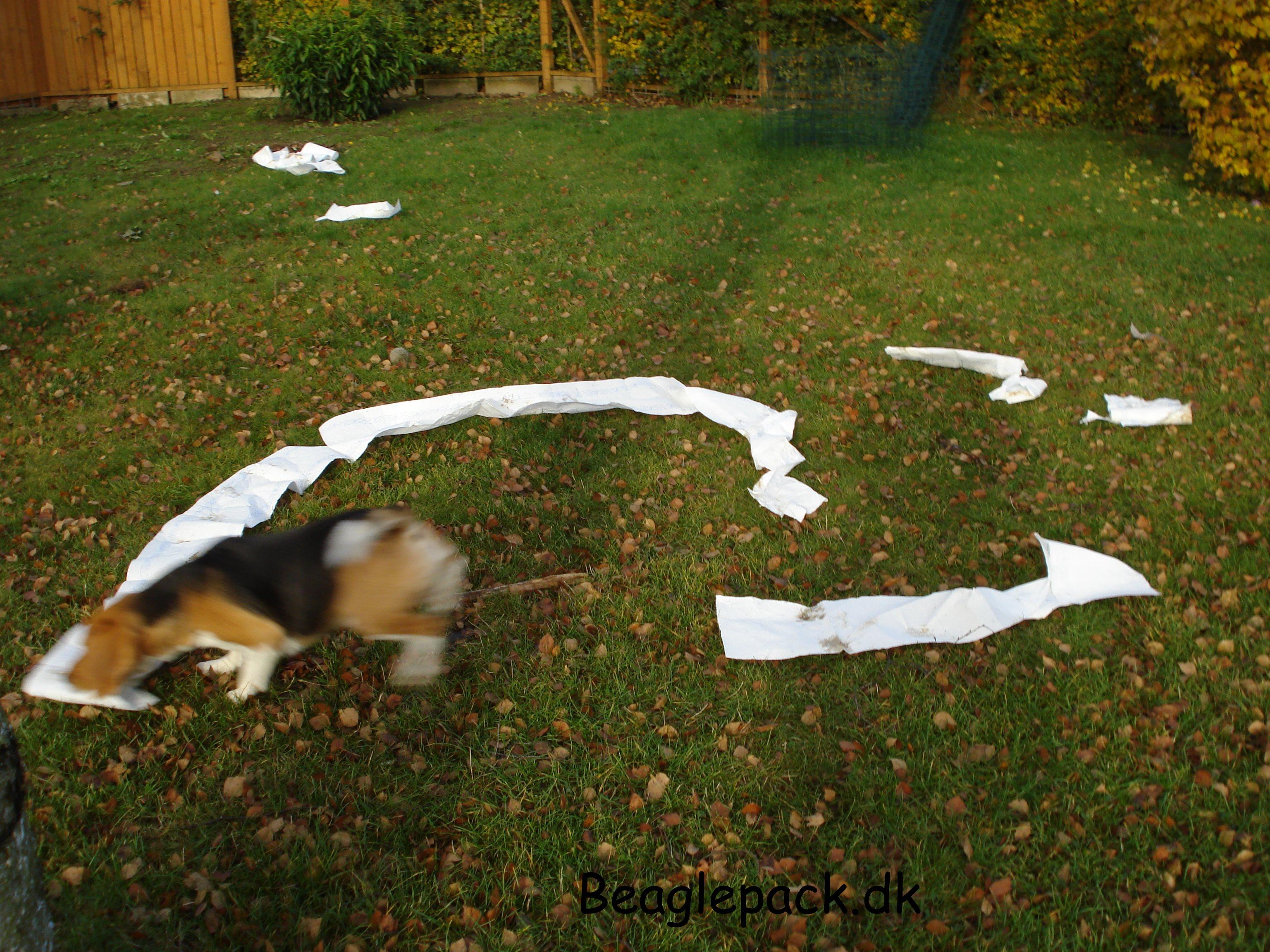 Oscar har nedlagt køkkenrullen - efterår 09