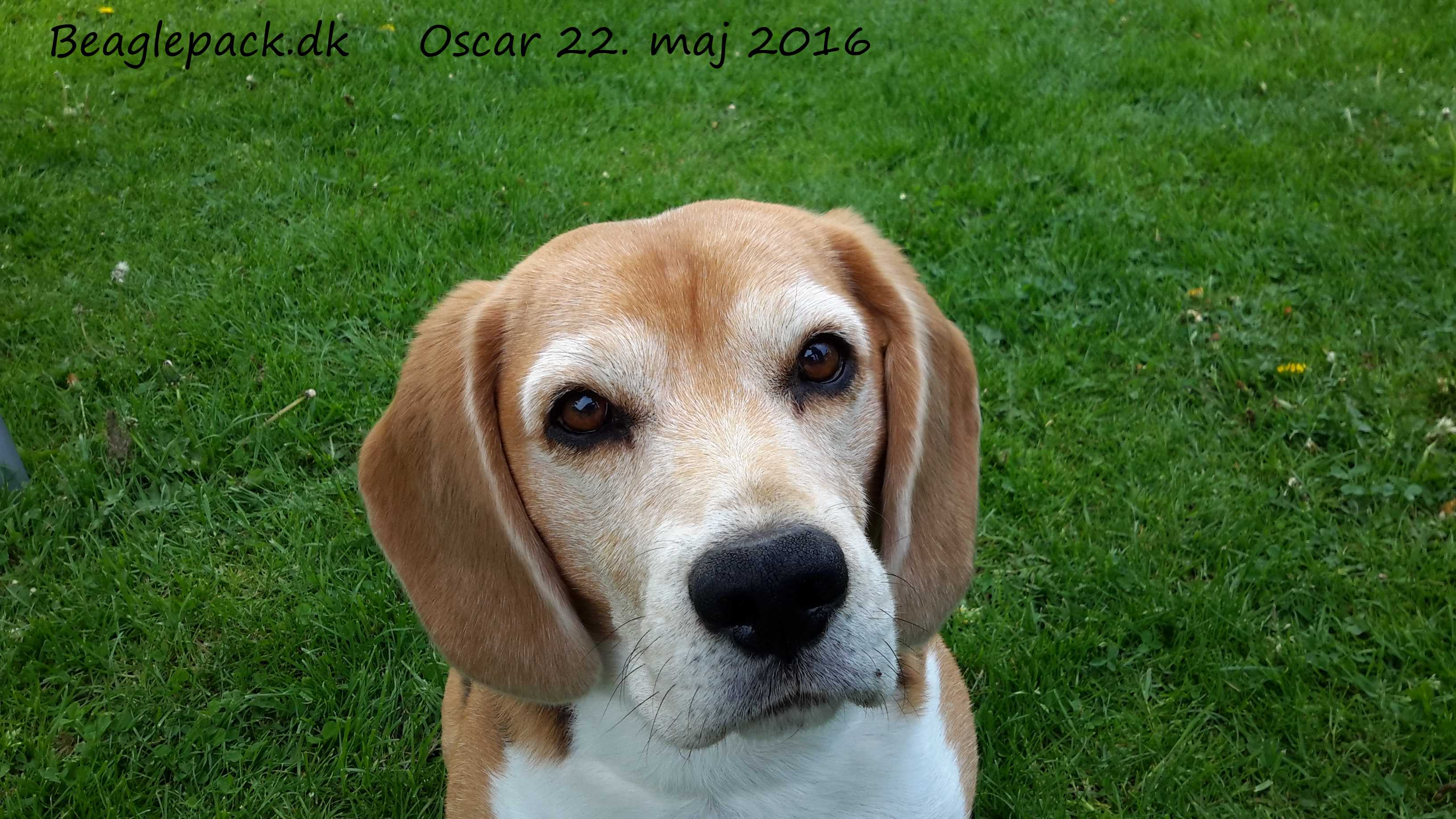 Oscar 22. maj 2016