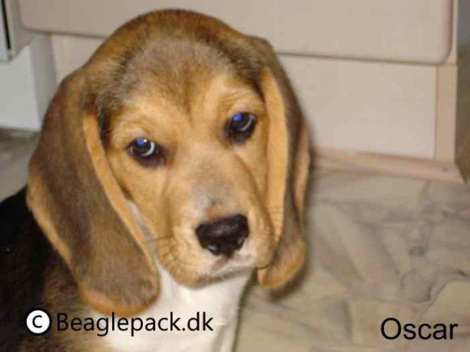 Oscar er nu blevet 11 år