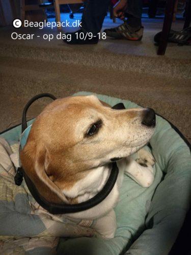 Oscar er nu blevet opereret!